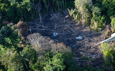Amazon rainforest in danger